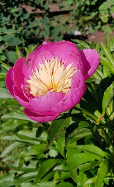 Ruusu-unelmia ja villasukkia